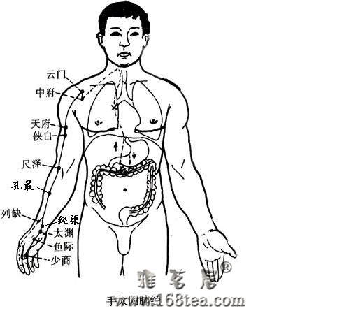 [推荐]肺经——大器晚成的相傅