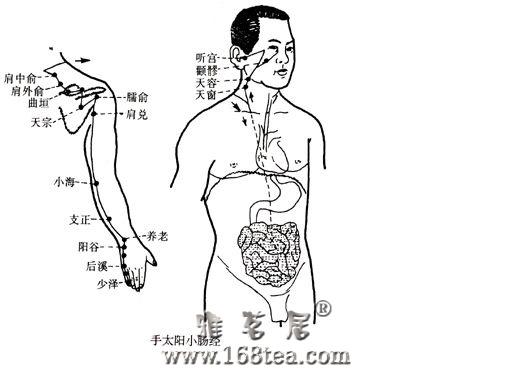 [推荐]心脏功能的晴雨表――小肠经经络