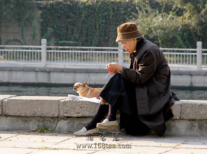 [原创]老人  .  狗