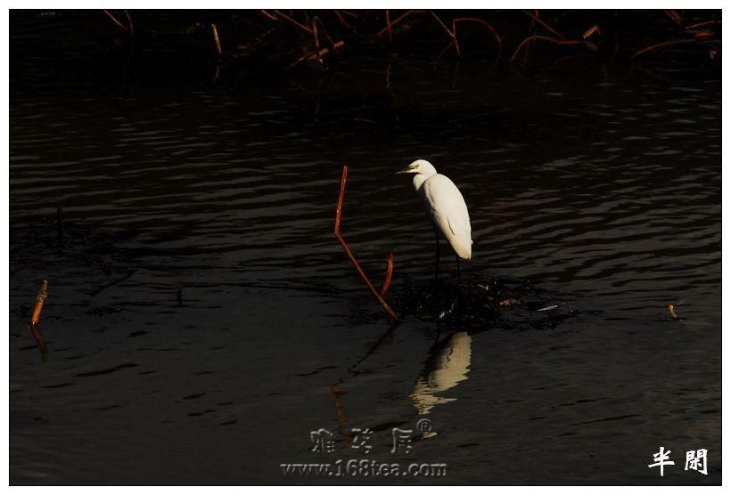 冬天的童话——湿地精灵