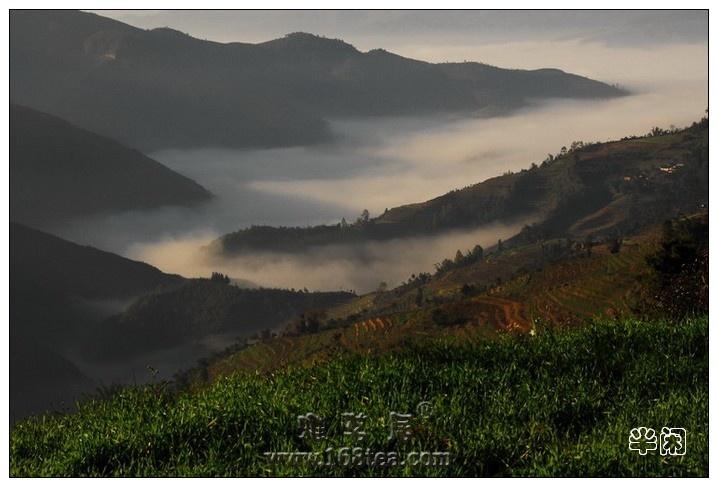 冬天的童话——彩云间的茶乡
