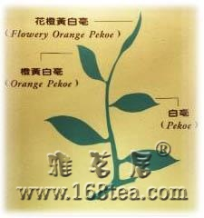 红茶基础――定义、制作、等级、色泽