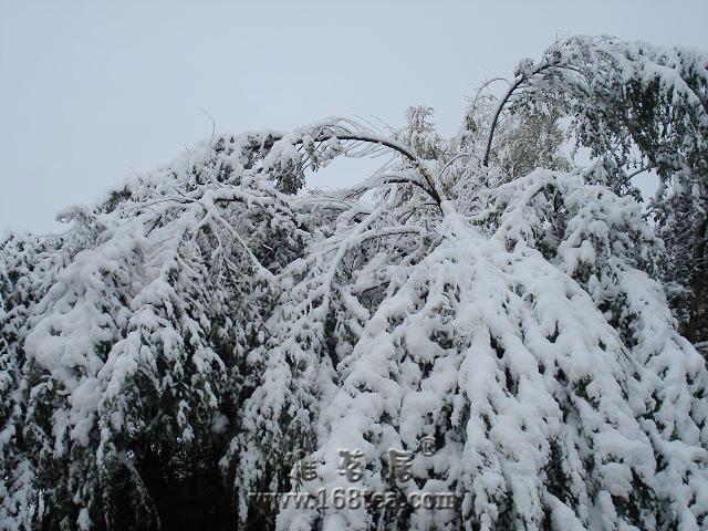 2007年的第一场雪  (10月8日)