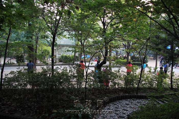早晨的首尔南山