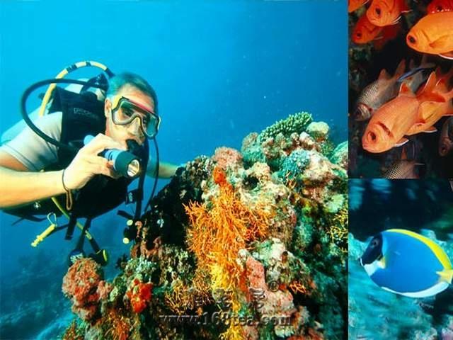 [原创]潜游水底,眼中景色骤然新