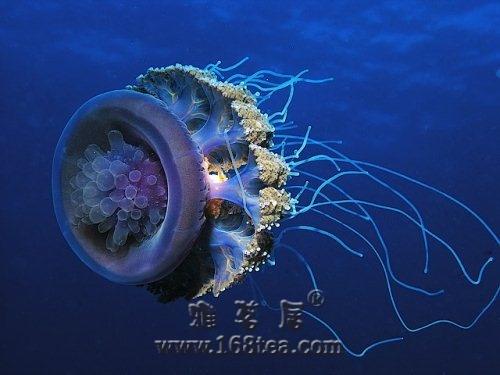 [分享]令人赏心悦目的水下摄影作品