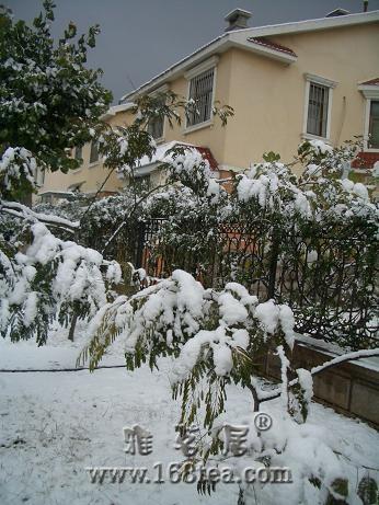 [分享][原创]2008年的第一场雪