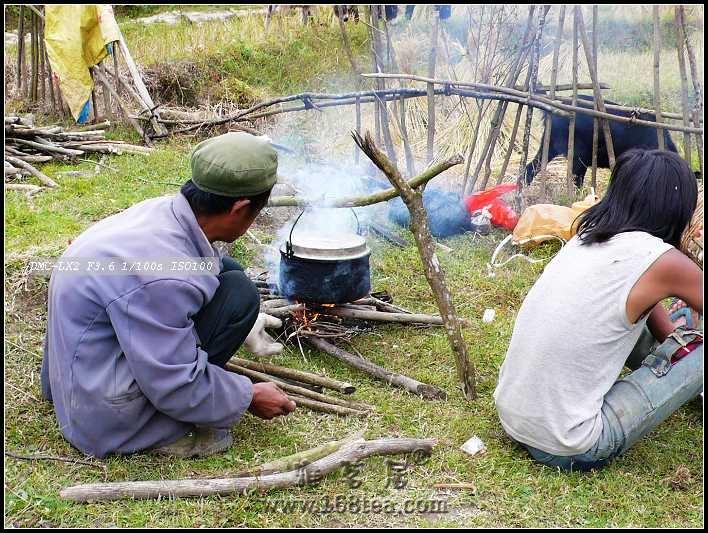 茶家寨之路---关于原生态茶园的解读