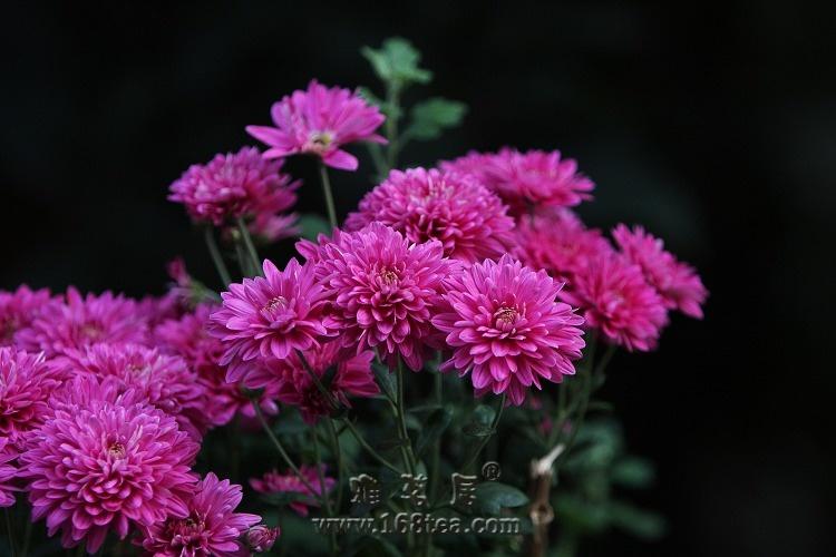 万佛寺里的花