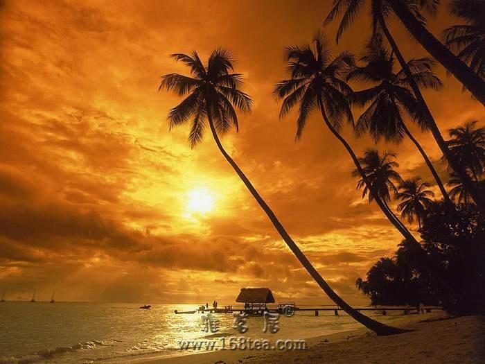 分享瑜伽音乐----日光海岸
