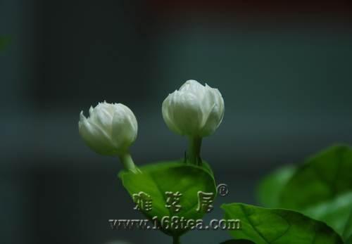 春季喝花茶养生又防病