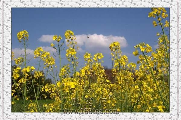 [分享]春