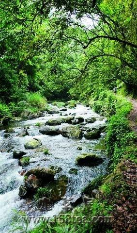 [推荐]夏日 去福建洗一场森林浴