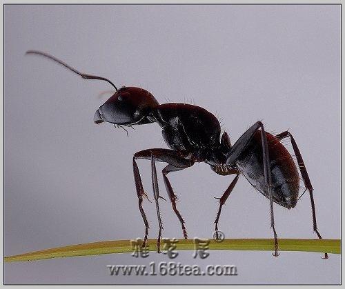 当蚂蚁也能如此洒脱^_^