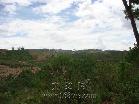 勐海-景迈-南糯山PP图