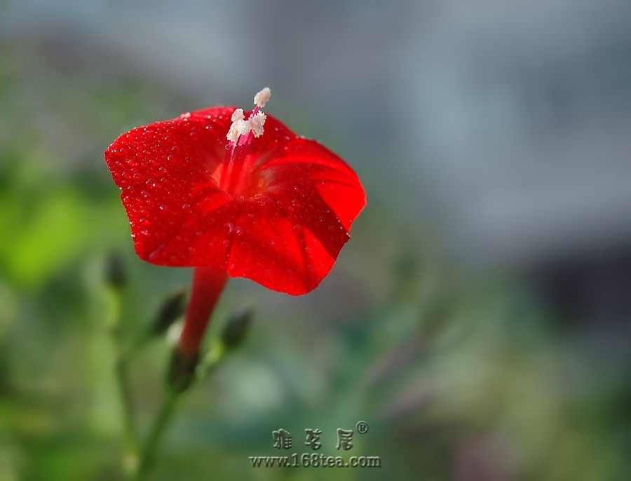 中国红!!!