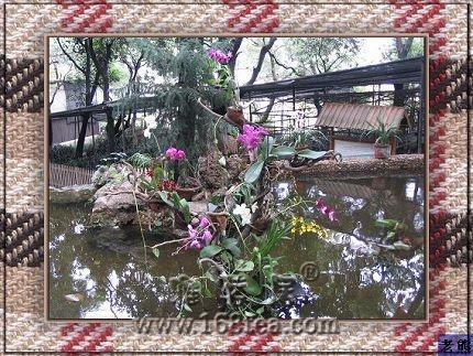 2009福州于山兰花展