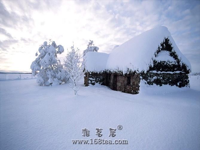 [原创]雪舞漫天天地白,白黑分明