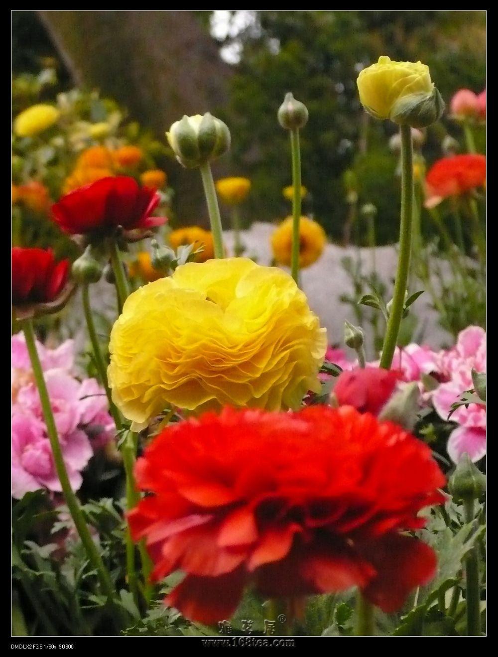 红的花黄的花