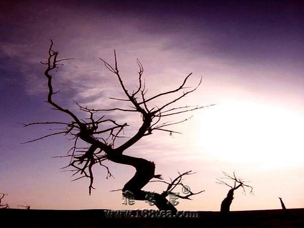 [原创]我要飞翔…… 来自胡杨林的记忆