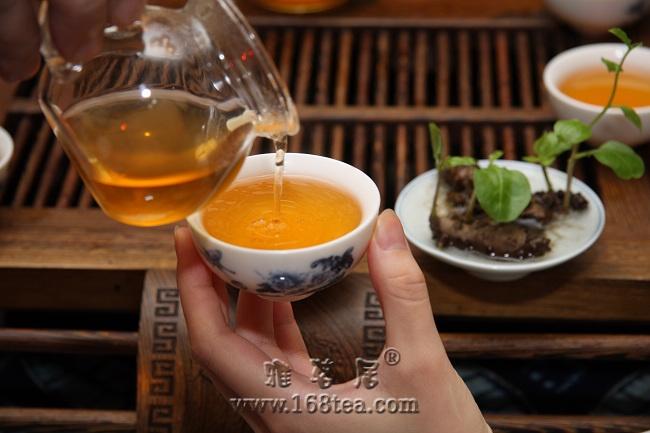 雅茗居大暑煎茶・最上镜人物评选