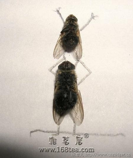 同志们看这个创意------死苍蝇的艺术