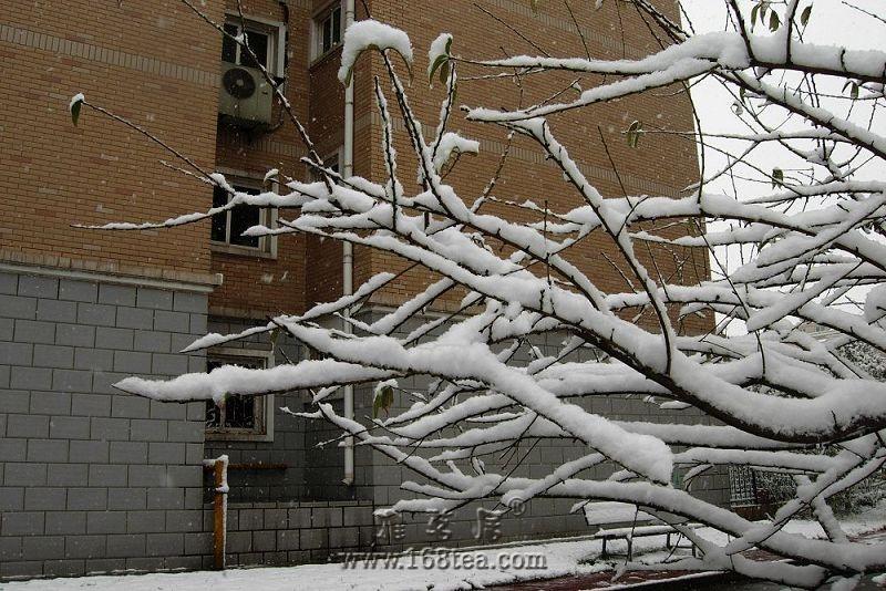 2009.11.1今冬的第一场雪