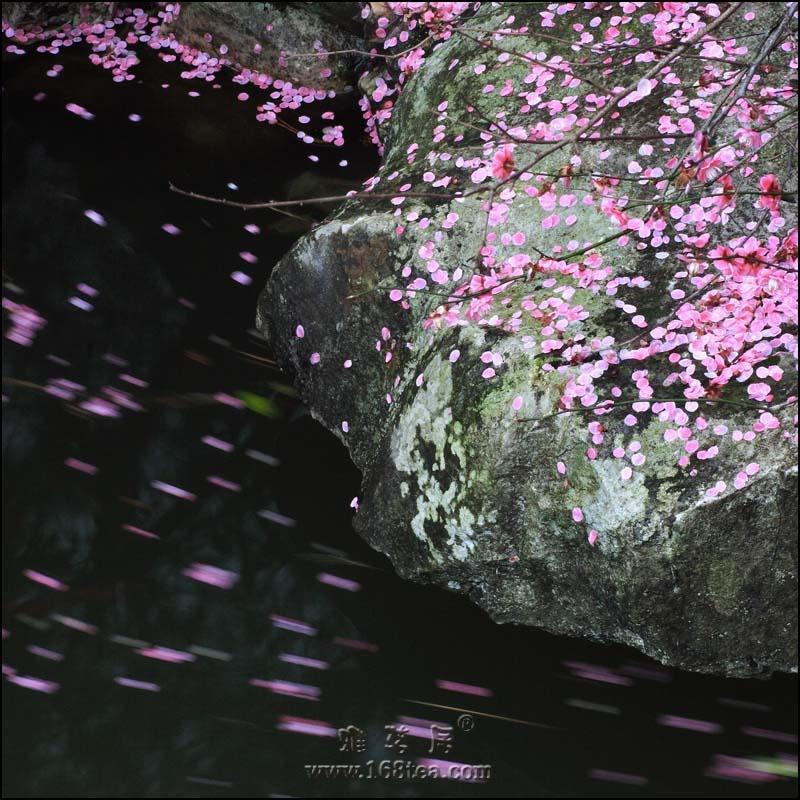 水中花――二胡曲(蒋倩竹)