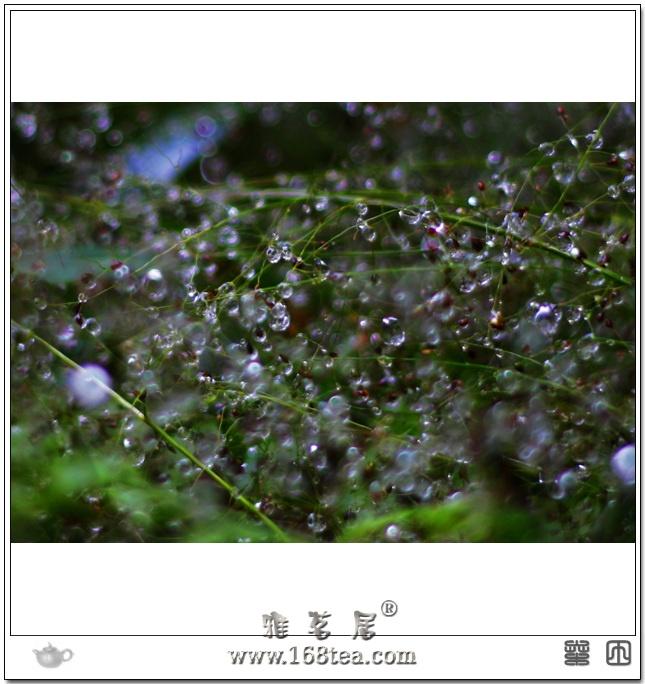 丛林 水珠