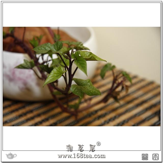 猜猜这是啥植物??