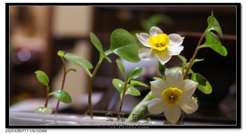水仙花与诗