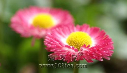 刘逢军:庚寅年立春时令提示