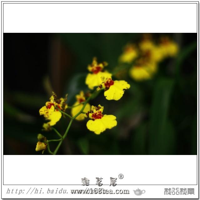 王者之香――兰花