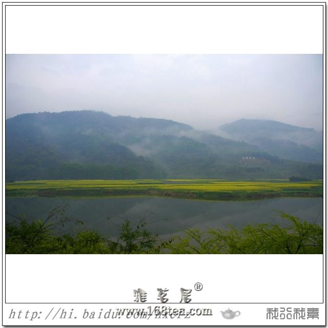 春来梧桐黄花艳(闽侯白沙梧桐下油菜花)