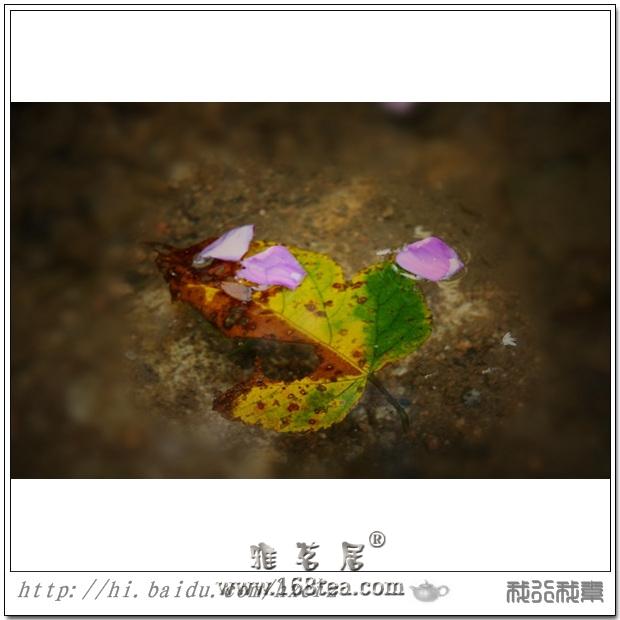 残叶落花流水情