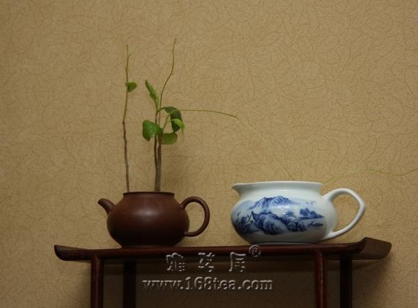 2010年雅茗居白露煎茶