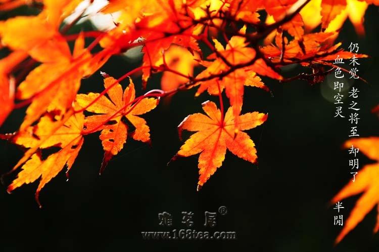 八声甘州   暮秋红叶
