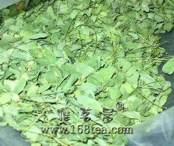 跟人家要了有些泰国的茶种子~但不知道名字,求指点(内附图)!