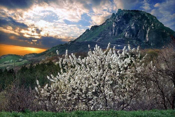 春天---令人心颤的美(三)