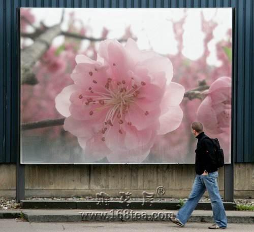 桃花绽放常在心(森林公园赏花)