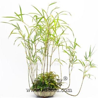 日本盆栽欣赏