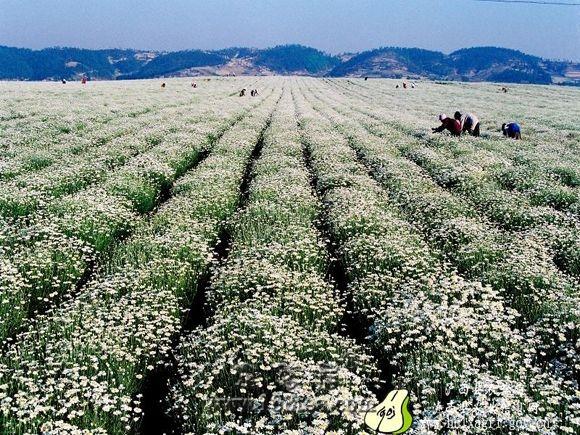 环保方便无污染的自制植物源农药