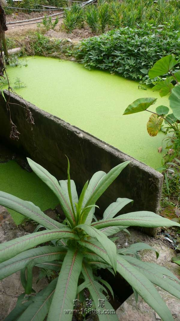 2011年,安溪淘茶随拍。