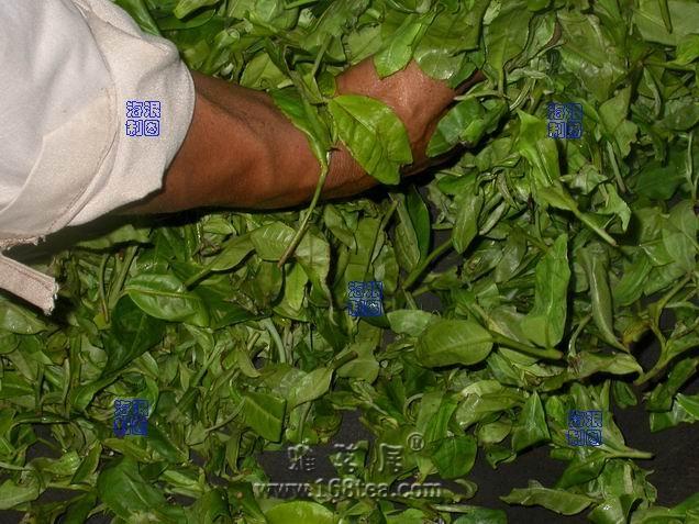 云南大叶种晒青毛茶传统制程和机制晒