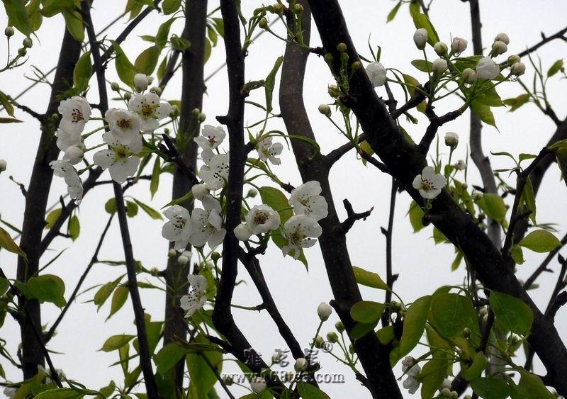 糖喱子的春天