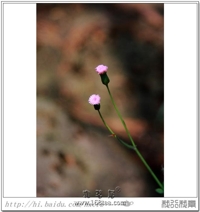 缘 (李汉颖 中国心灵慰籍音乐 紫色家园 3 )