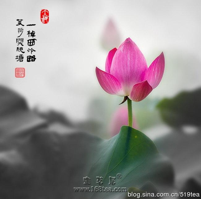 茶道茶艺表演:琴韵流深