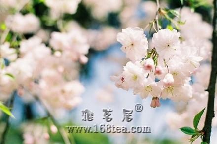 愈朴素单纯的人,愈有内在的芳香。