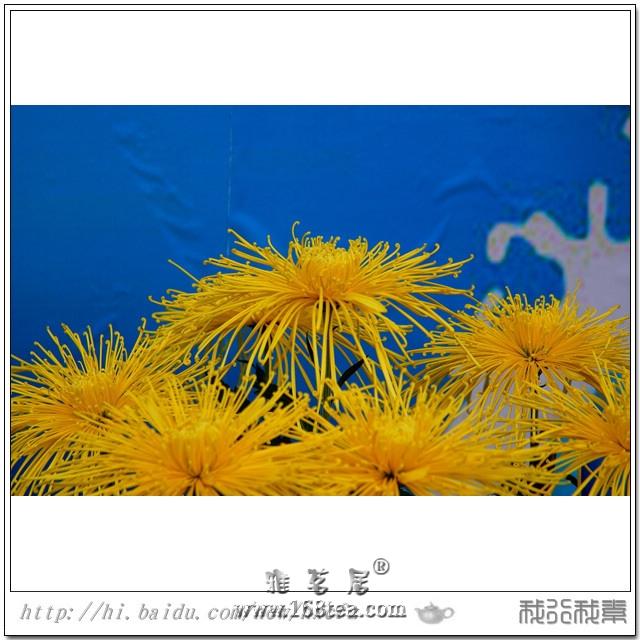 2012年茶亭金秋菊展