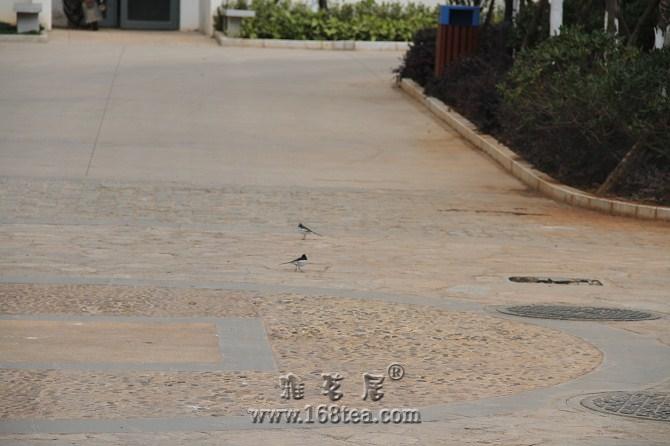 灌一个:地上的小鸟成双对